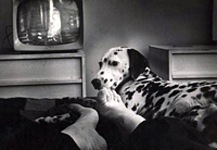 Sheba, Esther's feet, TV